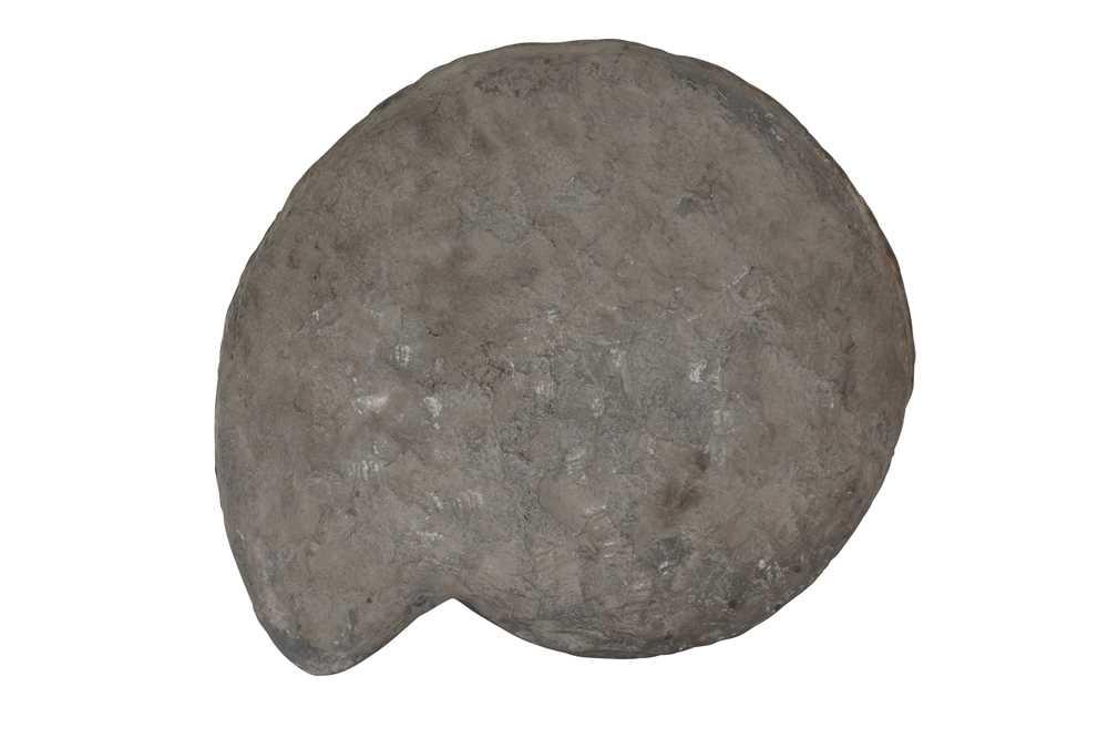 A LARGE ENGLISH AMMONITE, ARIETITES BUCKLANDI, 195 MILLION YEARS OLD - Image 2 of 2