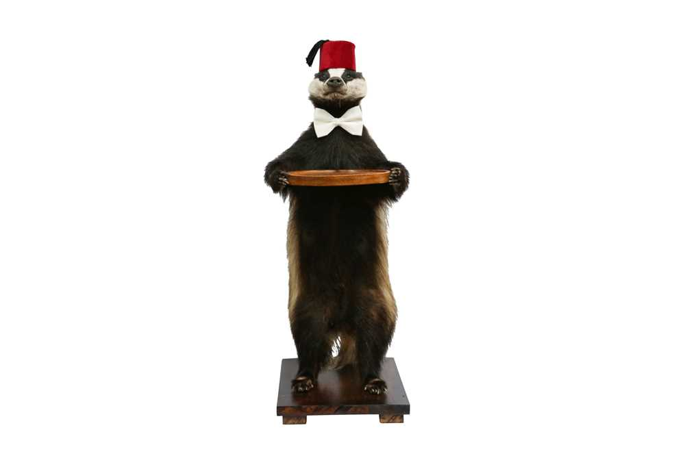 TAXIDERMY: A BADGER (MELES MELES) WAITER WEARING A FEZ AND A BOW TIE - Image 3 of 3