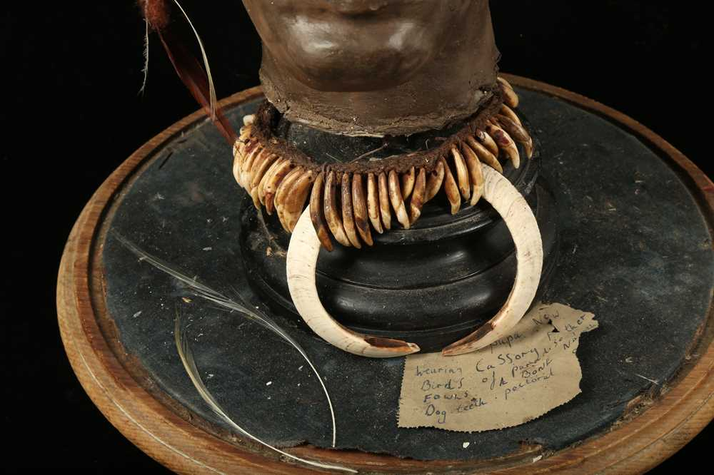 A MODEL OF A TRIBAL ELDERS' HEAD A NEW GUINEA TRIBAL HEAD UNDER A LARGE 19TH CENTURY GLASS DOME - Image 10 of 13