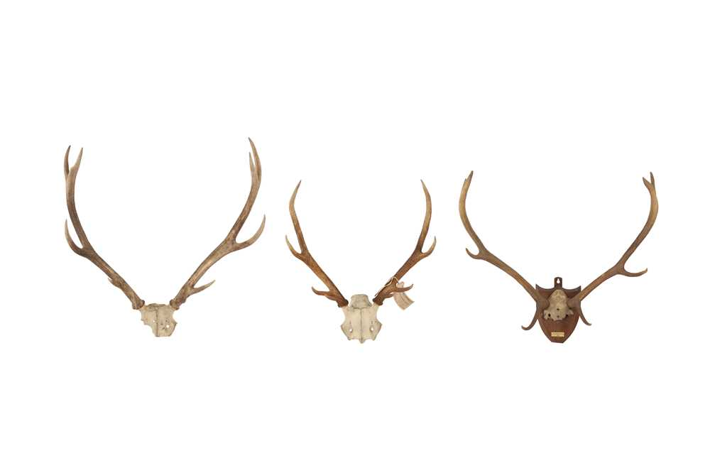 THREE SETS OF DEER ANTLERS INCLUDING ONE DATED 1904