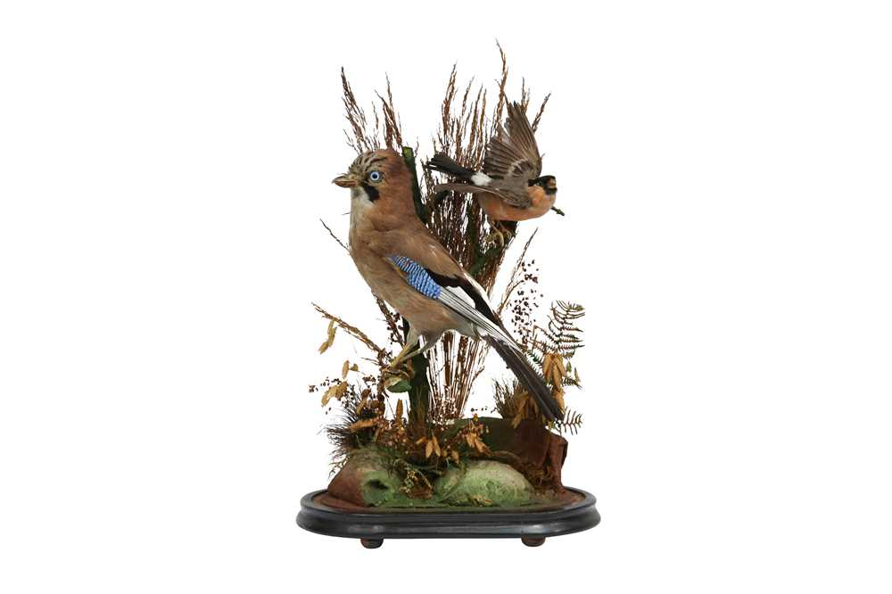 TAXIDERMY: A VICTORIAN JAY AND BULLFINCH IN GLASS DOME