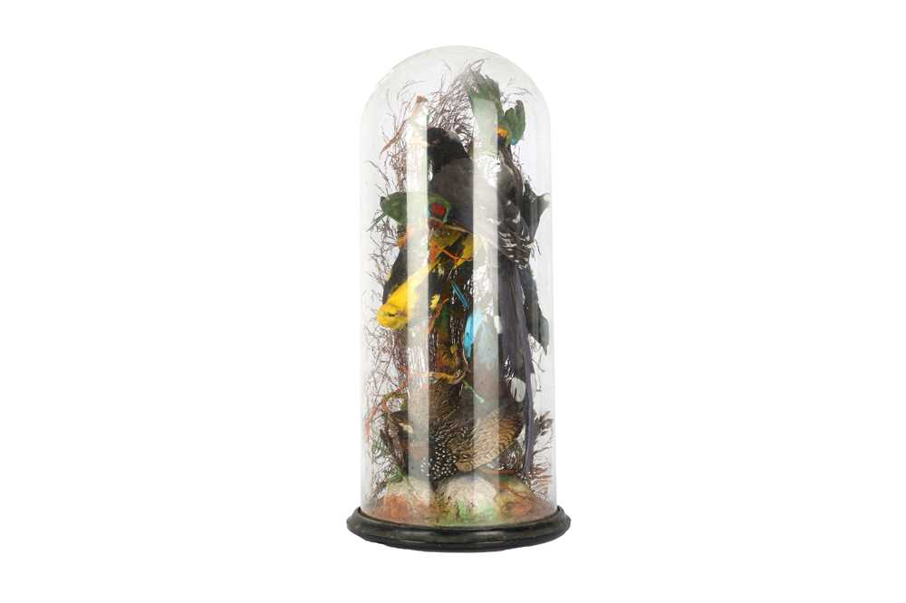 TAXIDERMY: A LATE 19TH CENTURY DISPLAY OF EXOTIC BIRDS BENEATH A GLASS DOME - Image 2 of 3