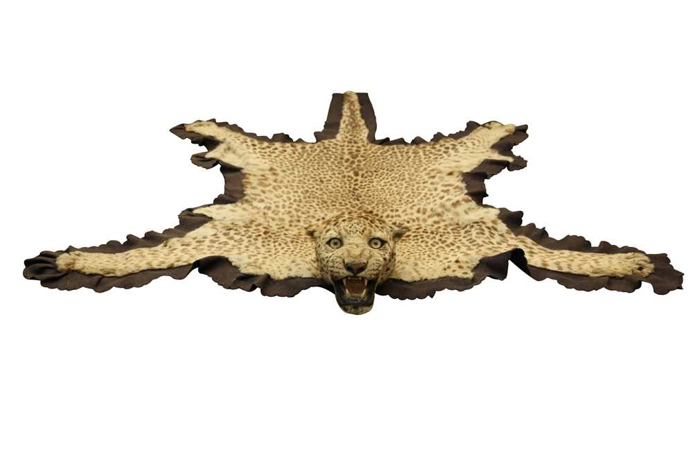 TAXIDERMY: AN INDIAN LEOPARD SKIN ( PANTHERA PARDUS PARDUS), BY TOCHER & TOCHER, EARLY 20TH CENTURY