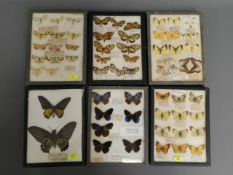Six mounted butterfly groups