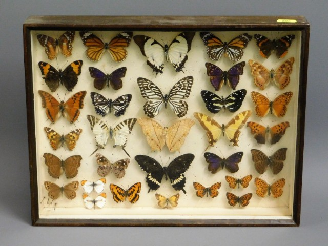An early/mid 20thC. cased collection of butterflie