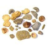 Quantity of assorted fossils