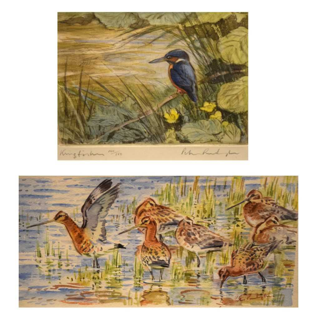 Peter Partington - watercolours - Black-tailed godwits, together with