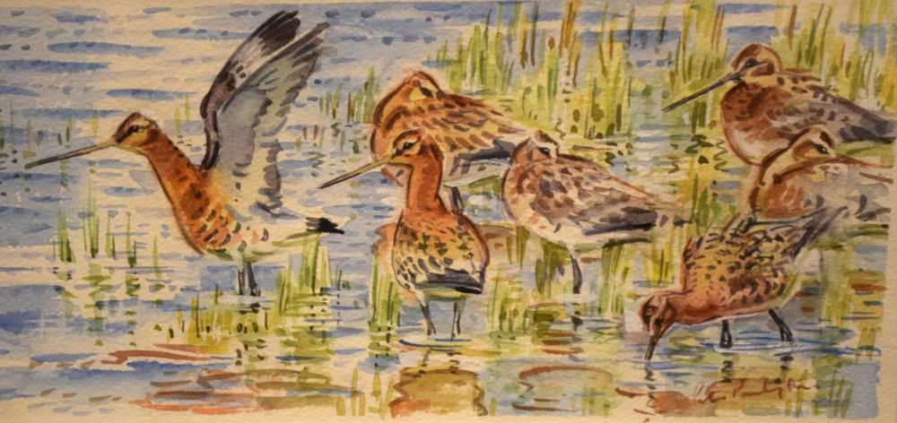 Peter Partington - watercolours - Black-tailed godwits, together with - Image 5 of 8