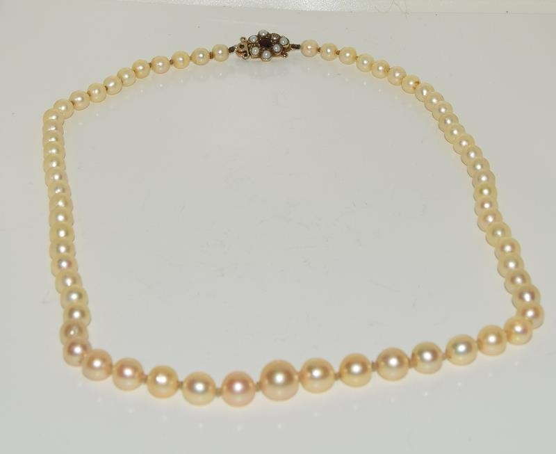 Ladies graduated pearl necklace set with 9ct gold and garnet clasp 51cm long