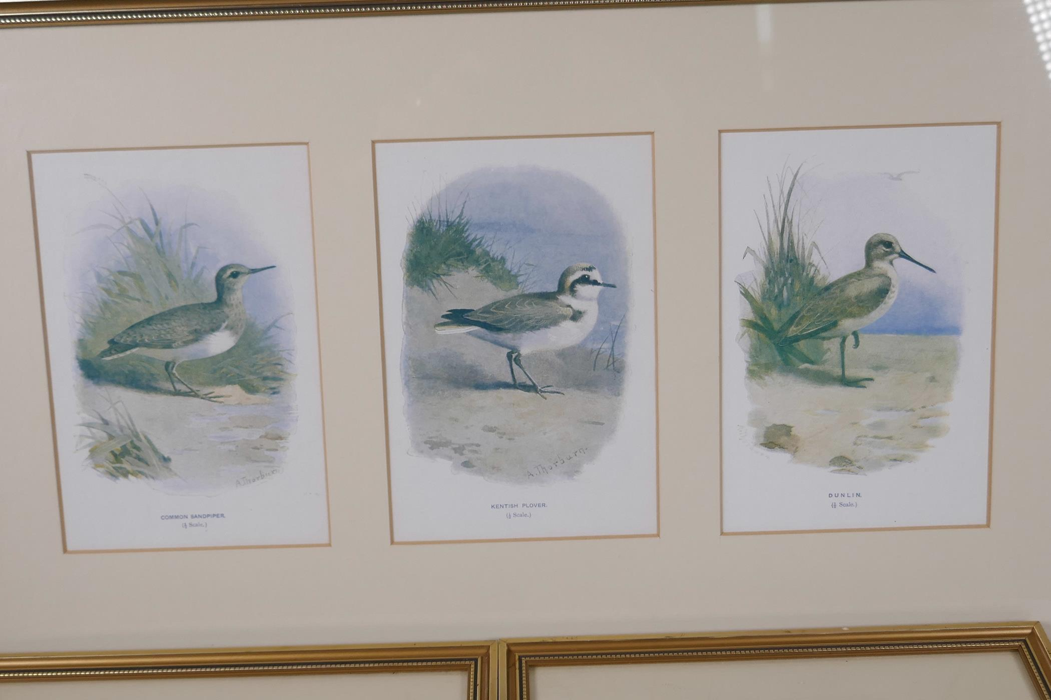 Five coloured prints of British birds after Archibald Thorburn, 'Common sandpiper', Kentish plover', - Image 2 of 3