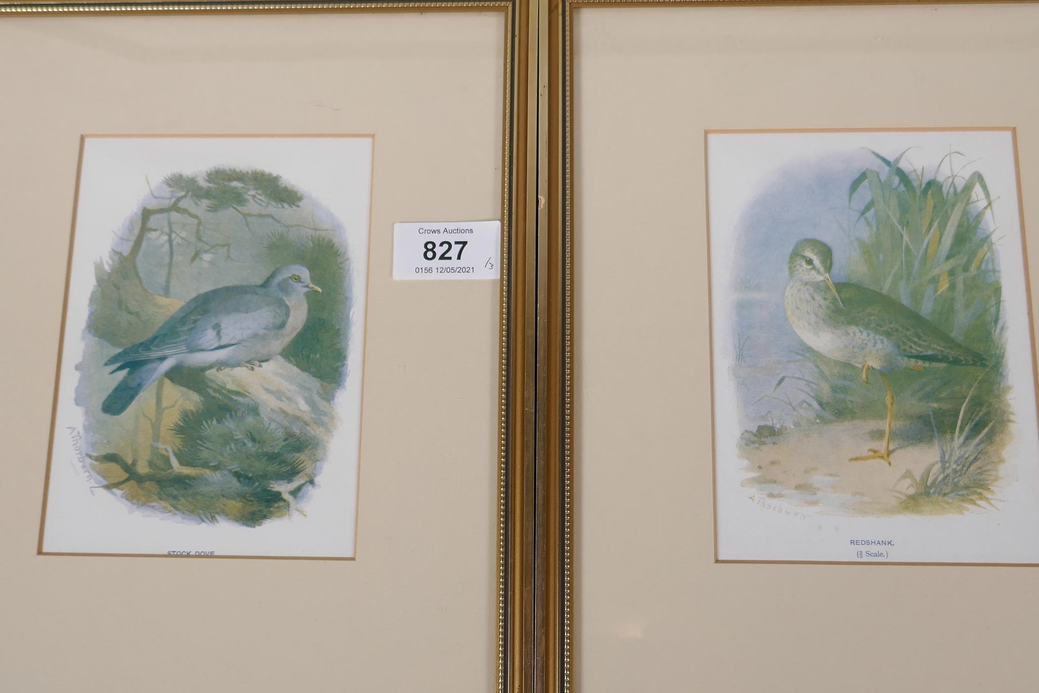 Five coloured prints of British birds after Archibald Thorburn, 'Common sandpiper', Kentish plover', - Image 3 of 3