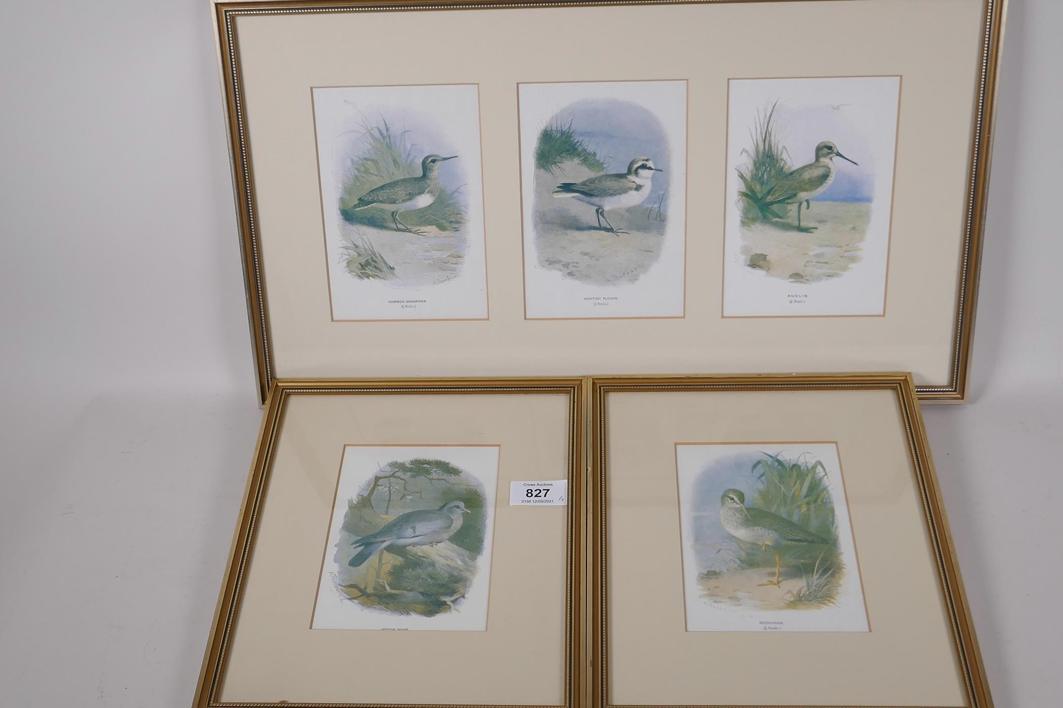 Five coloured prints of British birds after Archibald Thorburn, 'Common sandpiper', Kentish plover',