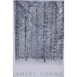 """Ansel Adams, framed poster, 'Pine Forest', with blind stamp, 23"""" x 36"""""""