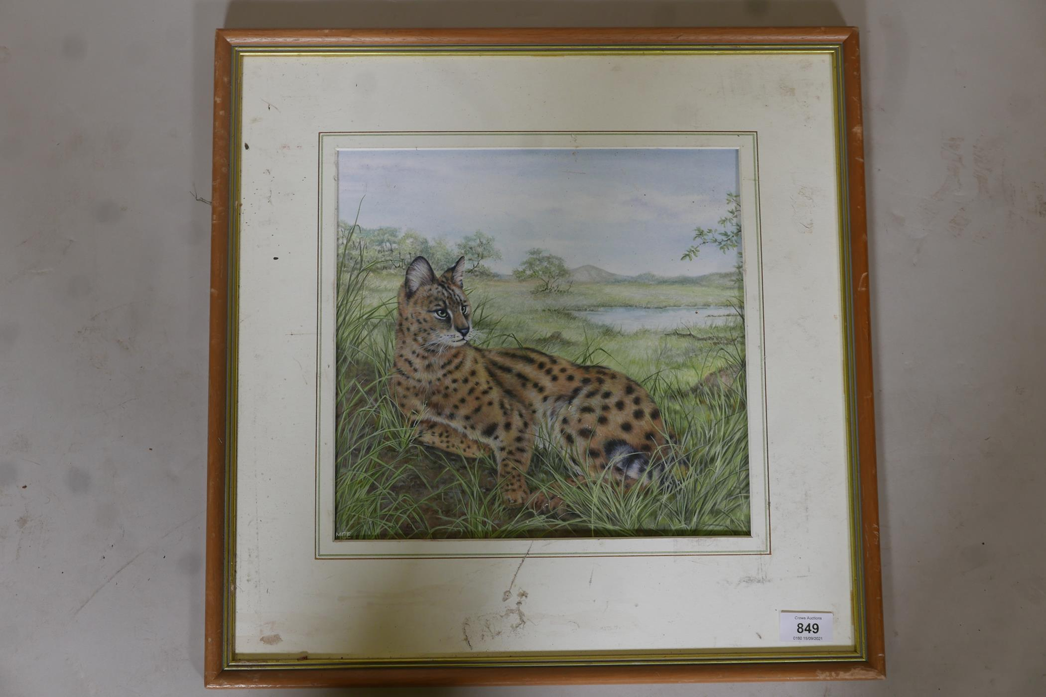 """Savannah cat in an African landscape, signed with a monogram MCE, watercolour, A/F, 12"""" x 11"""" - Image 2 of 4"""