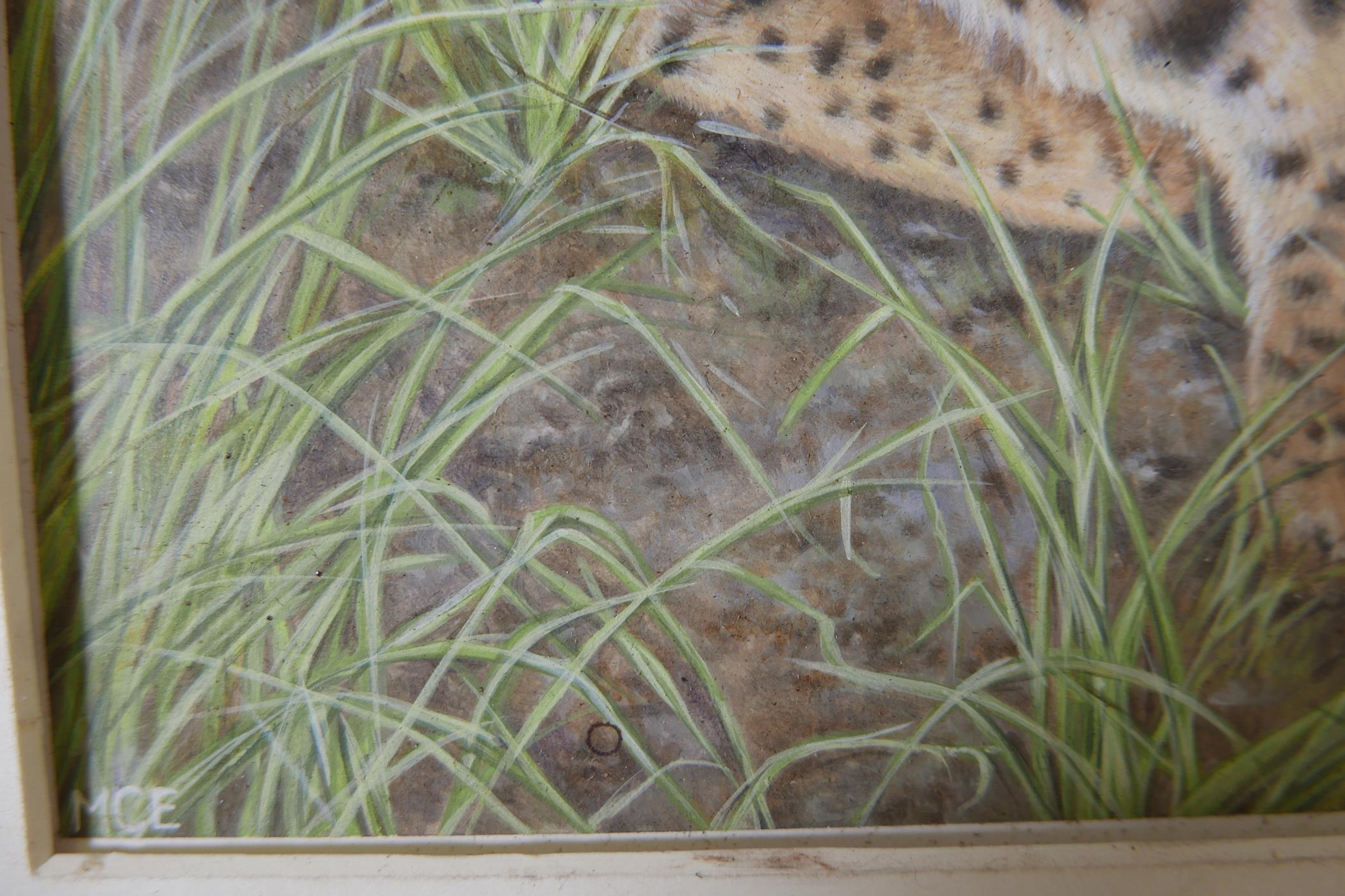 """Savannah cat in an African landscape, signed with a monogram MCE, watercolour, A/F, 12"""" x 11"""" - Image 4 of 4"""