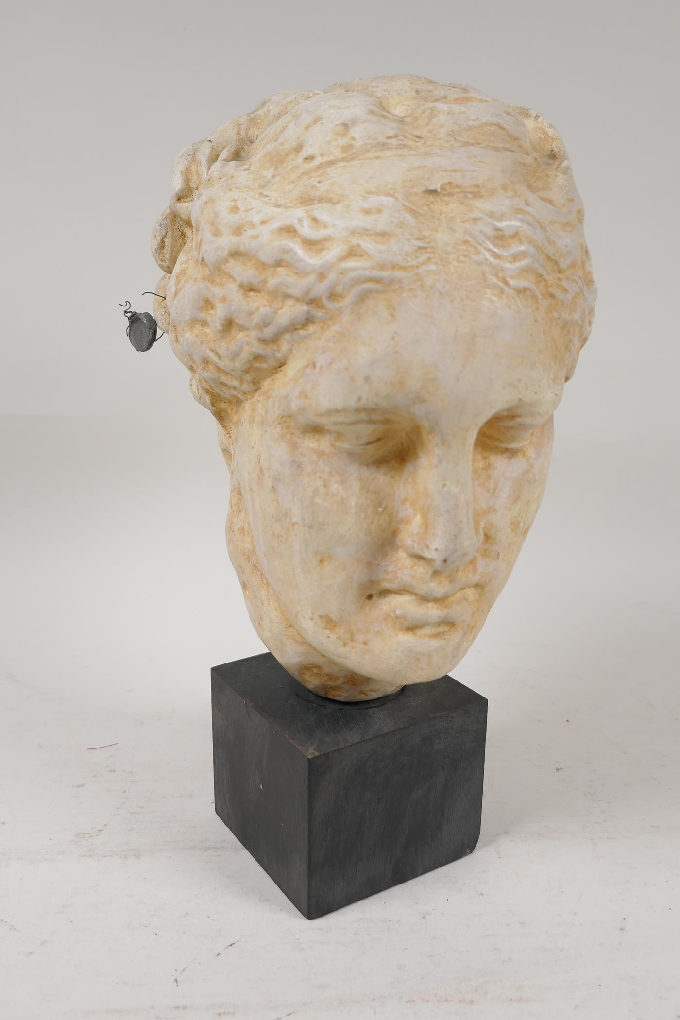 """A Grand Tour style pottery bust after the classic, with certifying seal attached, 10"""" high"""