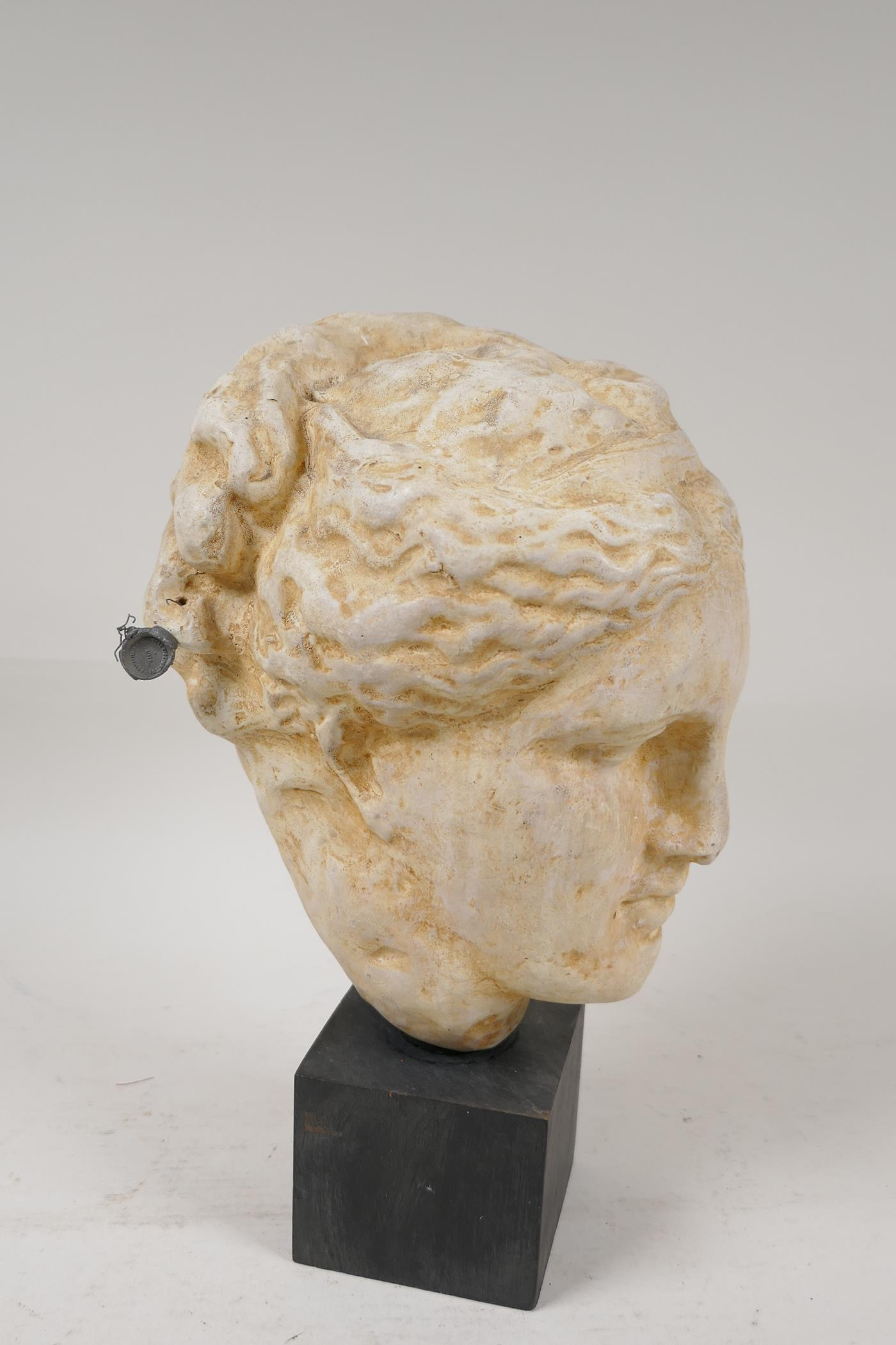 """A Grand Tour style pottery bust after the classic, with certifying seal attached, 10"""" high - Image 2 of 4"""