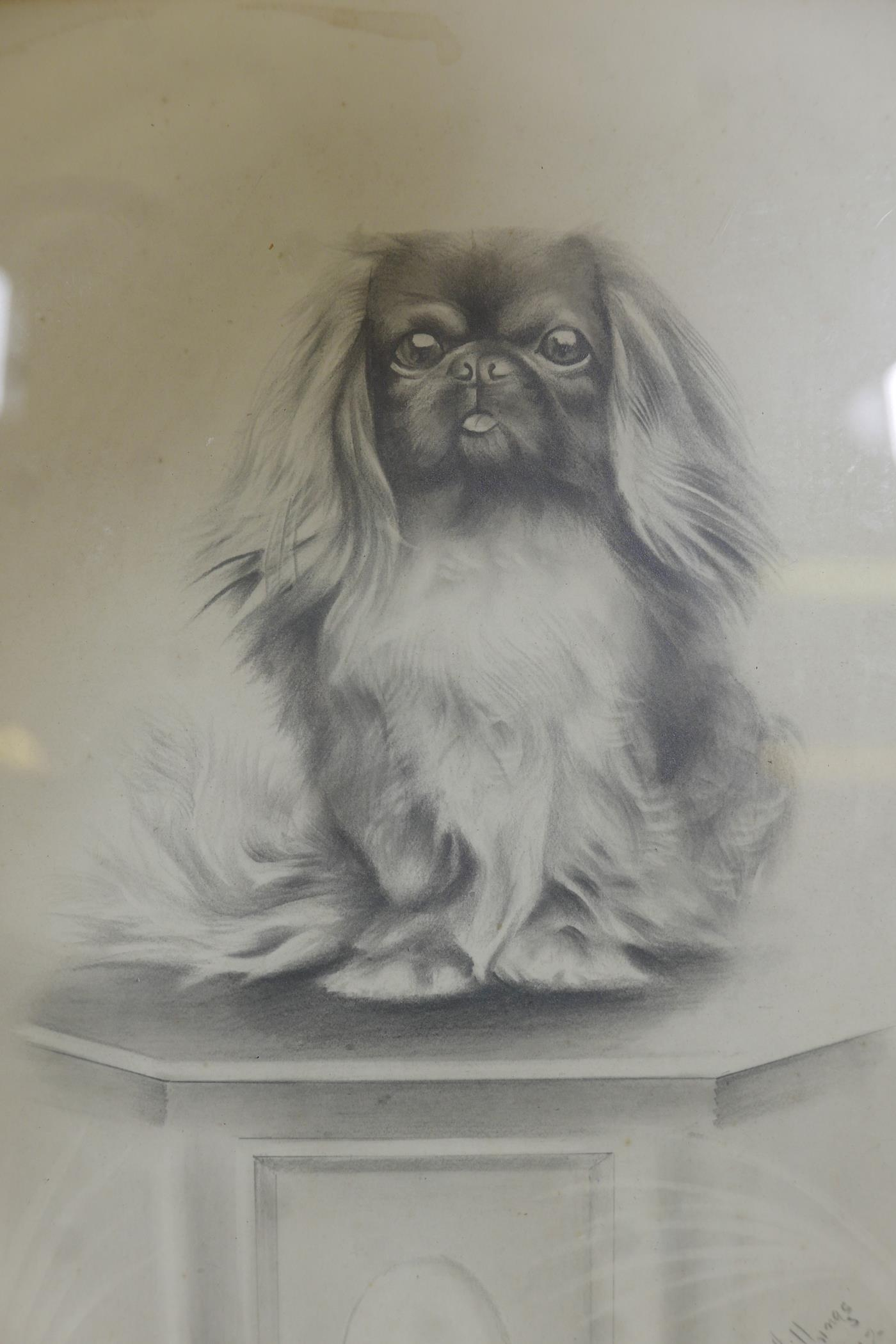 """H.W. Hellings, portrait of a Pekinese dog, signed and dated 1917, pencil drawing, 9"""" x 6"""""""