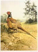 Edwin Penny (British 1930-): Pheasant, limited edition print pub. Venture Prints signed and numbered