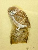 Robert E Fuller (British 1972-): Owl Perched on a Tree Trunk