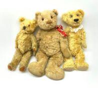 Farnell Invicta teddy bear