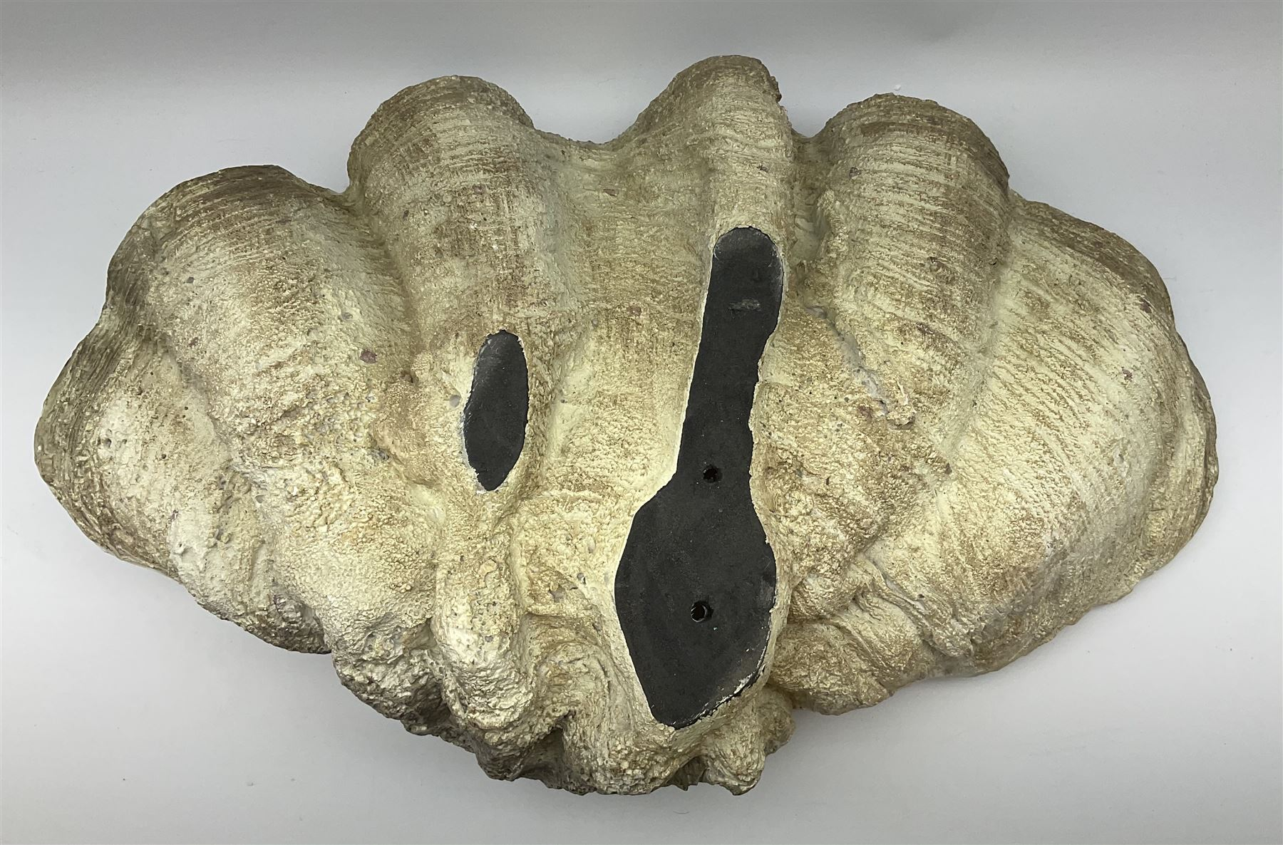 A composite model of a clam shell - Image 3 of 3