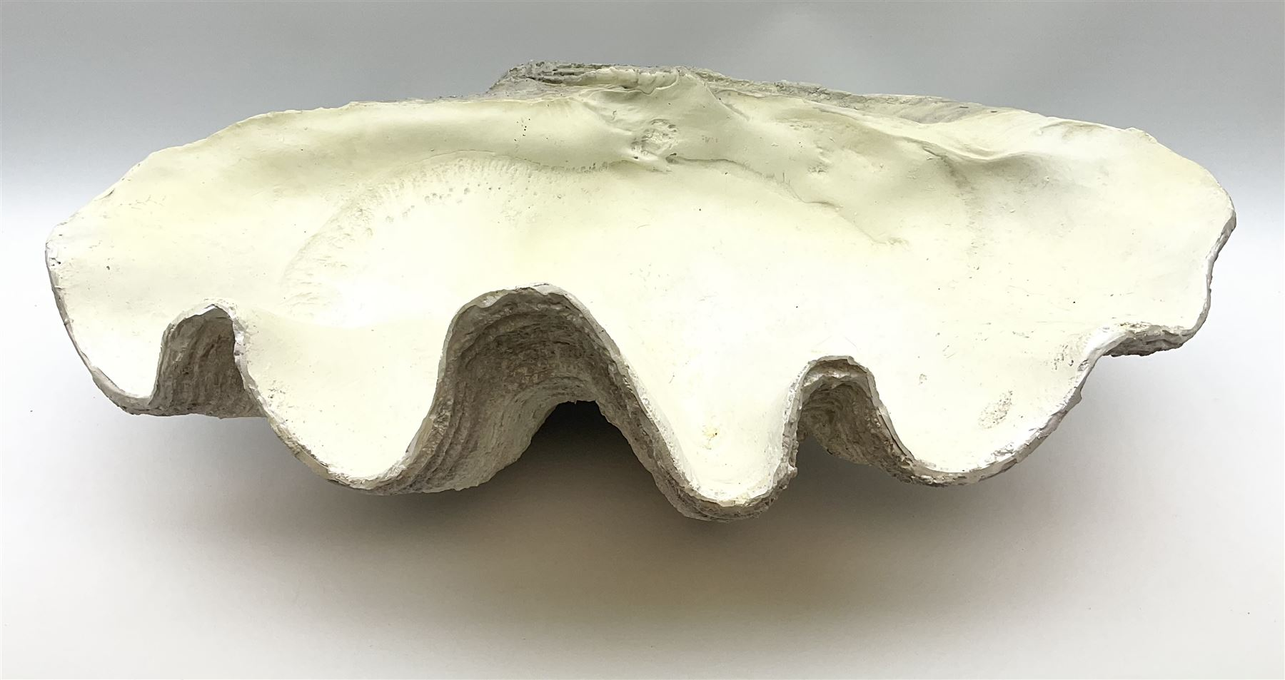 A composite model of a clam shell