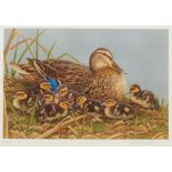 Robert E Fuller (British 1972-): Study of a Duck and Ducklings