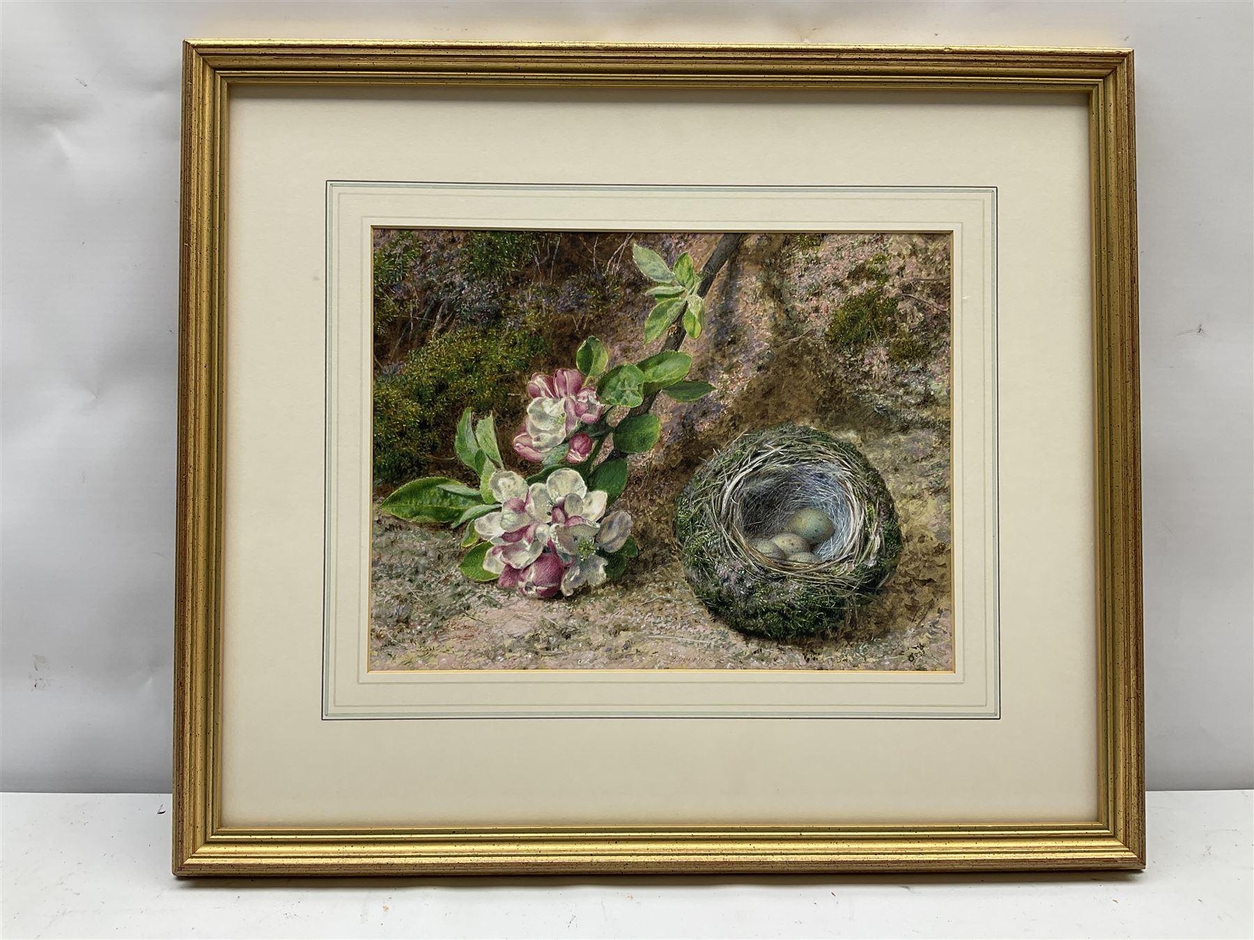 John Sherrin (British 1819-1896): Apple Blossom and Birds Nest on a Mossy Bank - Image 2 of 4