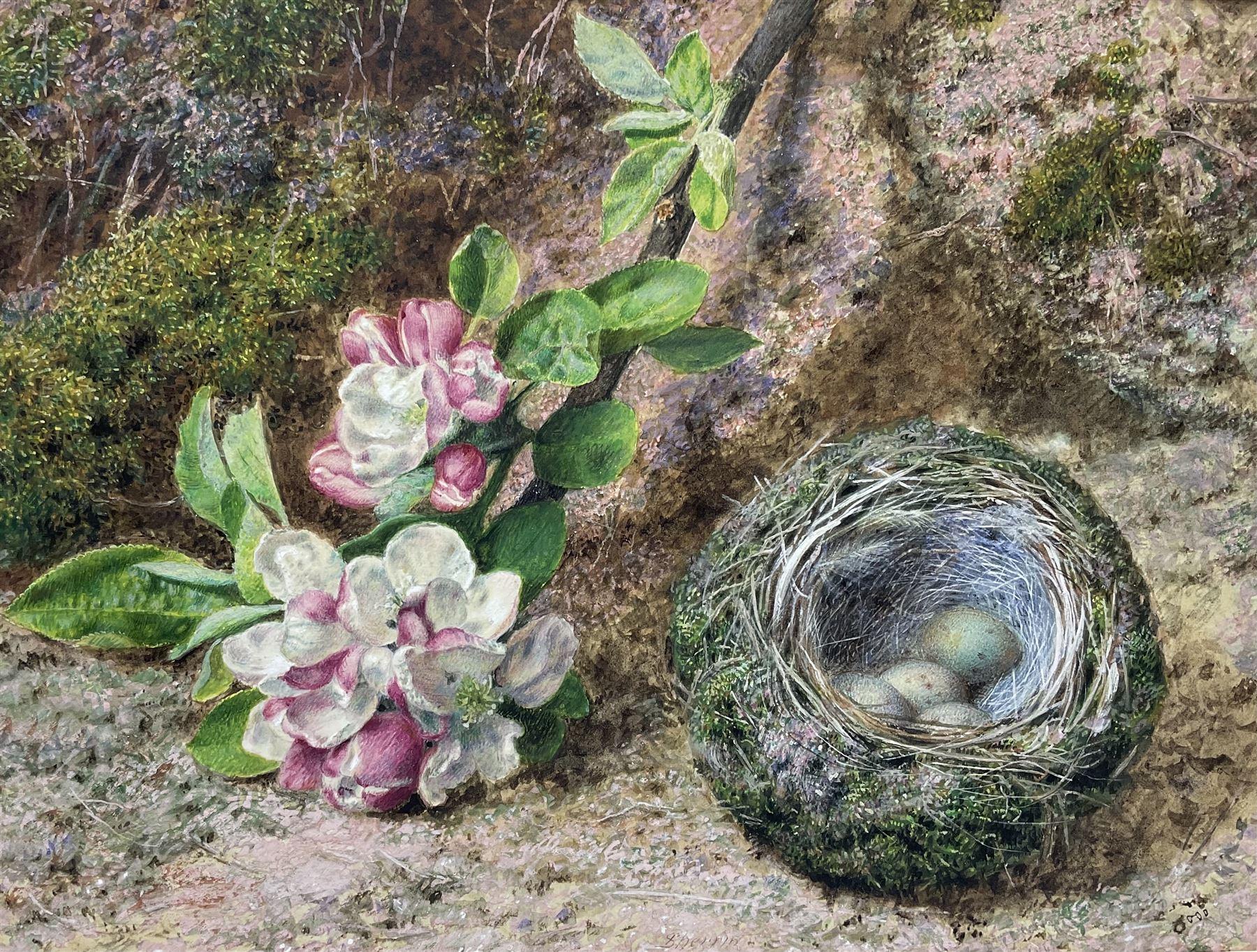 John Sherrin (British 1819-1896): Apple Blossom and Birds Nest on a Mossy Bank