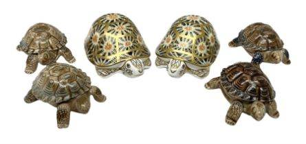 Two Royal Crown Derby Indian Star Tortoise paperweights with gold stoppers and four Wade tortoises