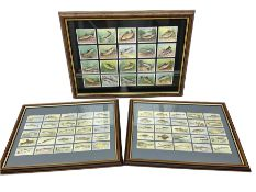 Two glazed frames each containing twenty five Player's cigarette cards of various fish