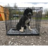 """A black double door dog crate / cage with tray measuring 30 1/4 x 21 1/4 x 25 1/2"""" approx. (77 x"""