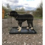 """A Rosewood single door dog crate / cage with tray measuring 30 3/4 x 21 1/4 x 24 1/2"""" approx. (78"""