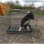 """A single door dog crate / cage measuring 30 3/4 x 25 1/4 x 27 1/2"""" approx. (78 x 64 x 70cm"""