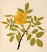 Album. An album of flower collages, circa 1830s-1840s