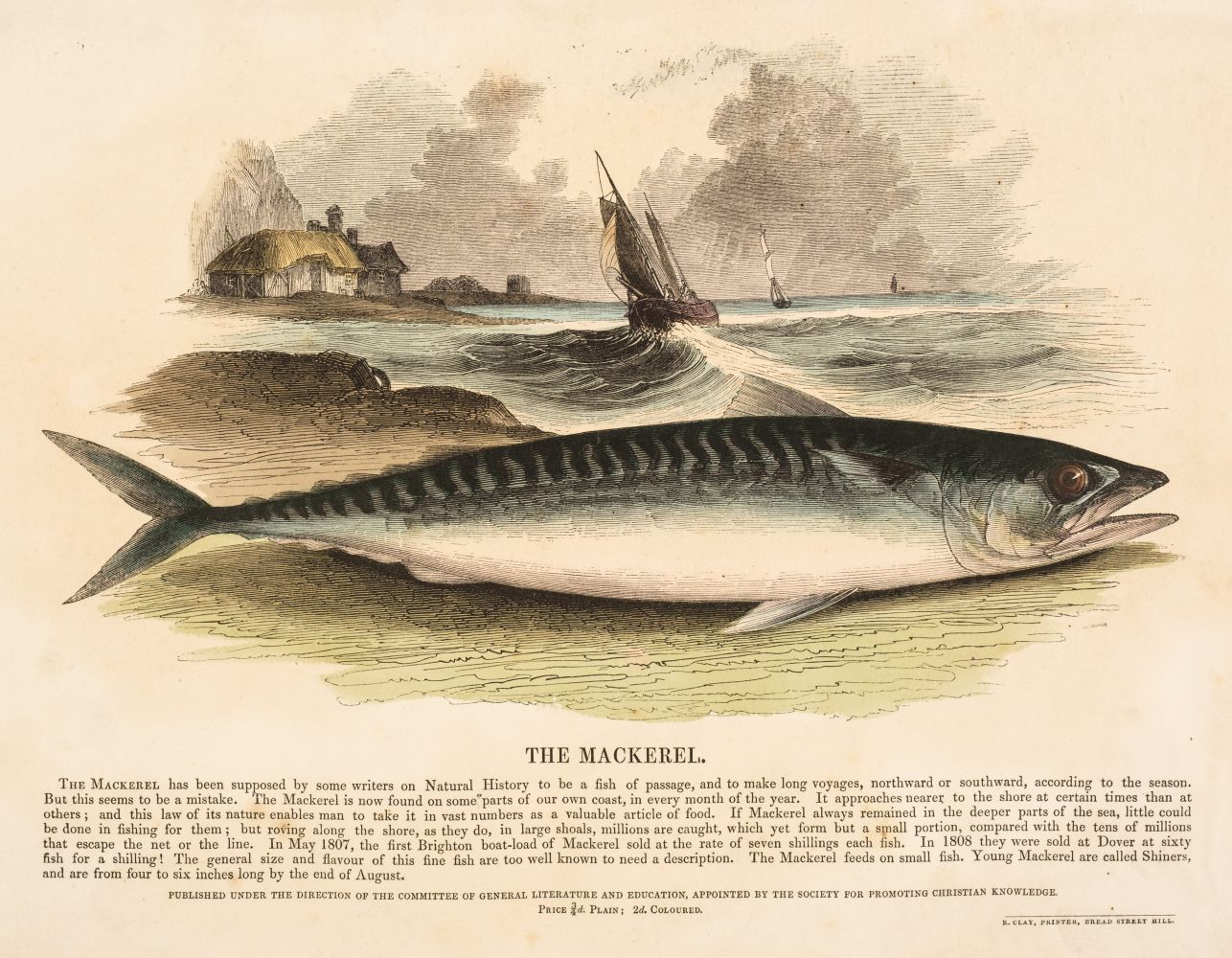 S. P. C. K. An album of 40 'Plates Illustrative of Natural History', 1845 - 50