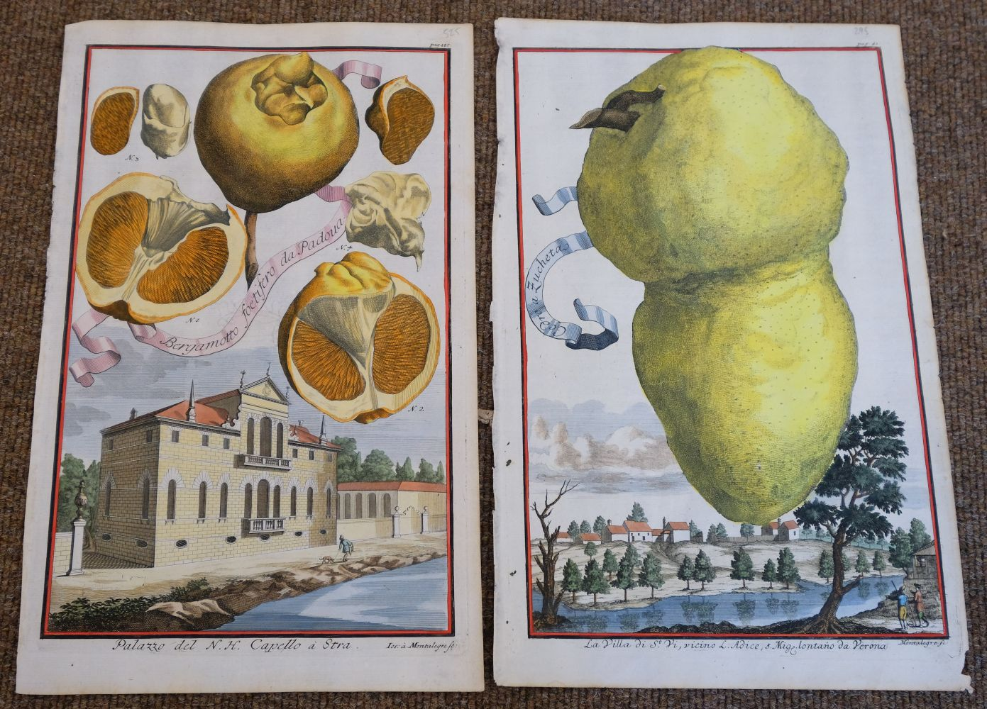 * Fruit. Volckamer (J. C.), Five plates from ' Nurnbergische Hesperides...', 1708 - Image 3 of 6