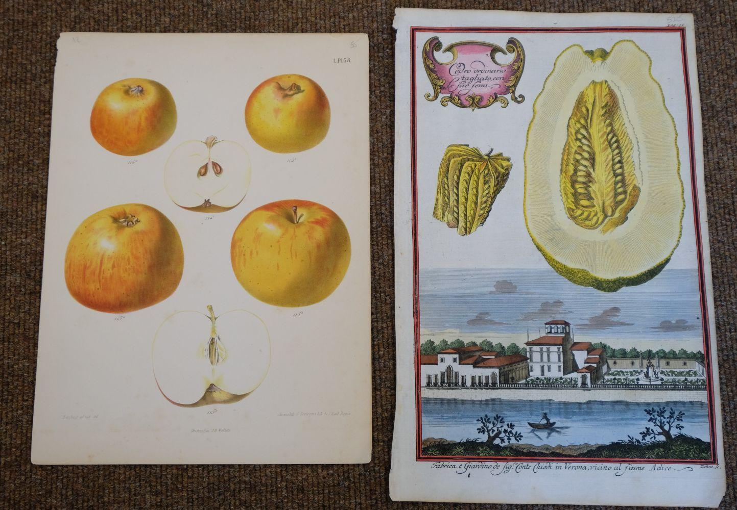* Fruit. Volckamer (J. C.), Five plates from ' Nurnbergische Hesperides...', 1708 - Image 5 of 6