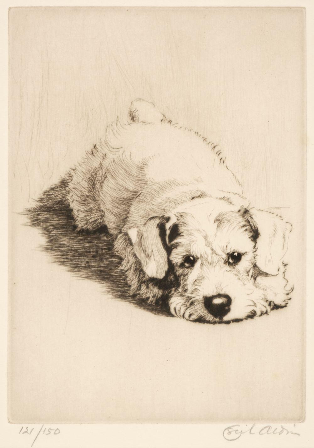 * Aldin (Cecil Charles Windsor, 1870 - 1935). A Sealyham Puppy