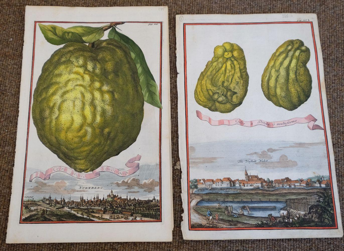 * Fruit. Volckamer (J. C.), Five plates from ' Nurnbergische Hesperides...', 1708 - Image 4 of 6