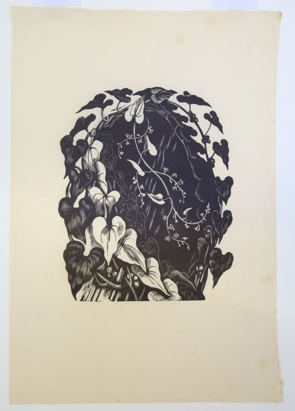 * Nash (John, 1893-1977). Yew Taxus Baccata Taxaceae, Illustration for 'Poisonous Plants. - Image 4 of 8