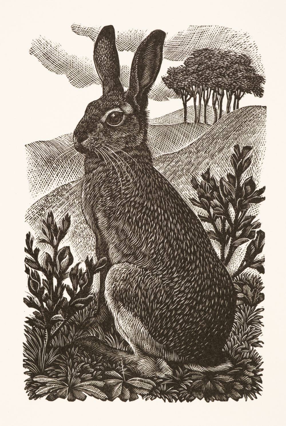 ARR * § Tunnicliffe (Charles Frederick1901-1978). Sitting Hare, 1949