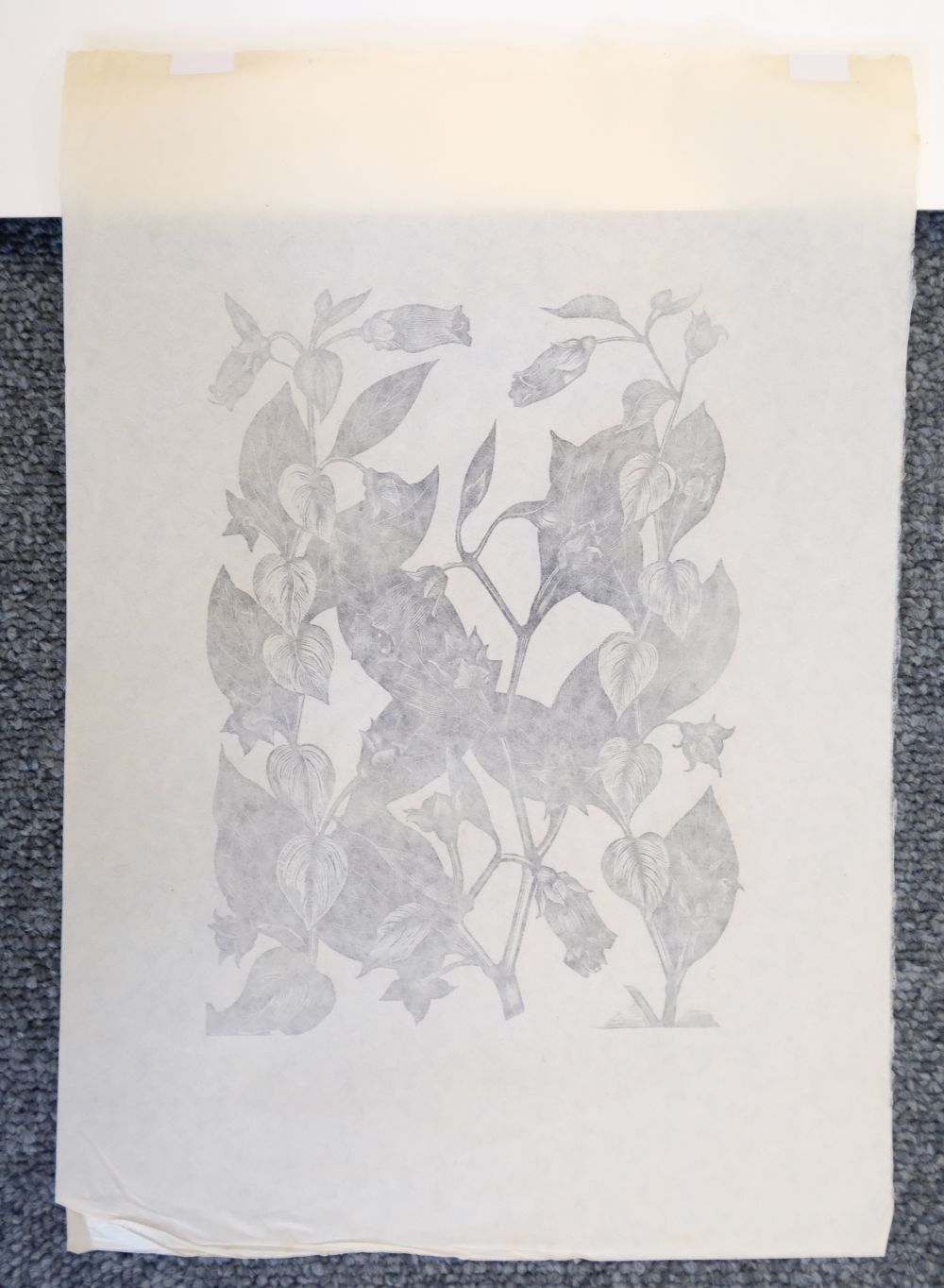* Nash (John, 1893-1977). Yew Taxus Baccata Taxaceae, Illustration for 'Poisonous Plants. - Image 3 of 8