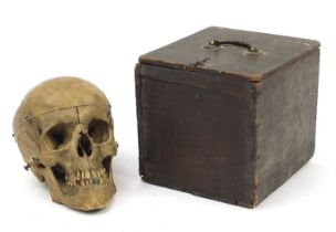 18th/19th century dissected medical human skull with Latin inscriptions and pine box, the skull 24cm