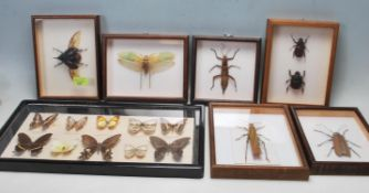 ENTOMOLOGY INTEREST - COLLECTION OF FRAMED EXOTIC INSECT DISPLAYS.