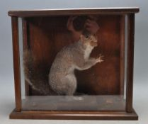 TAXIDERMY CASED EXAMPLE OF A SQUIRREL