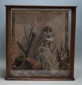 ANTIQUE EARLY 20TH CENTURY TAXIDERMY TAWNY OWL