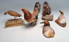 COLLECTION OF LATE 20TH CENTURY VINTAGE TAXIDERMY