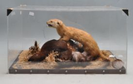 TAXIDERMY - A CASED EARLY 20TH CENTURY STOAT AND ITS PREY